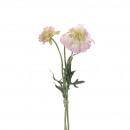 Scabiosa filigree, 3 he waistband, 2 Blossoms, 1 b